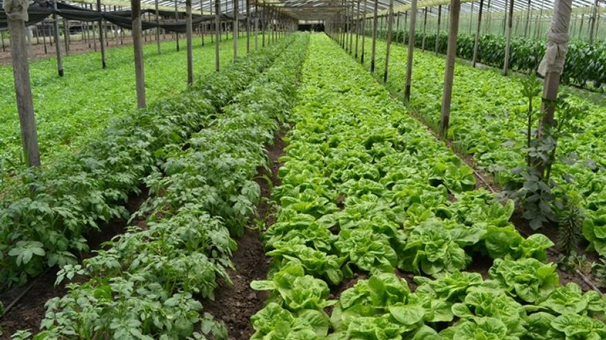 Destinan más de $32 millones para proyectos agroecológicos en ocho localidades bonaerenses