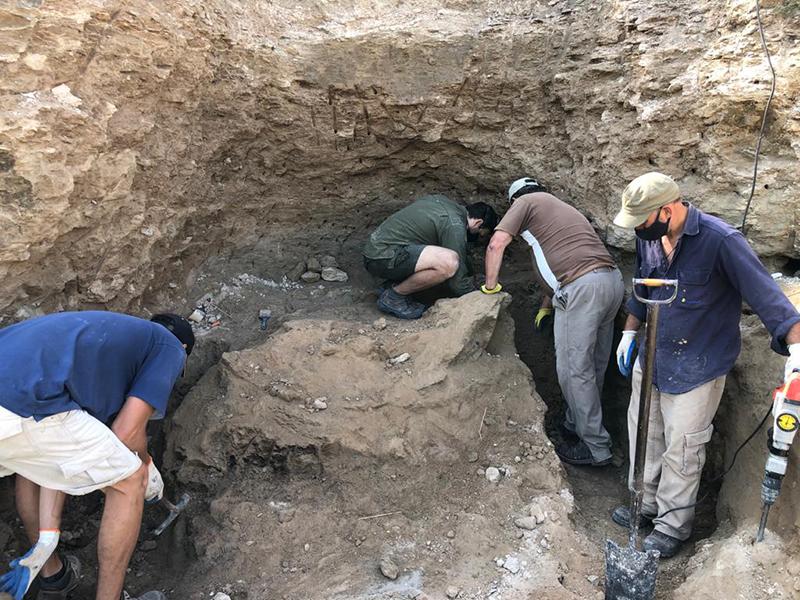 El hallazgo de un gliptodonte en el Salto de Piedra cambia la historia de la evolución de la fauna en la cuenca del Tapalqué