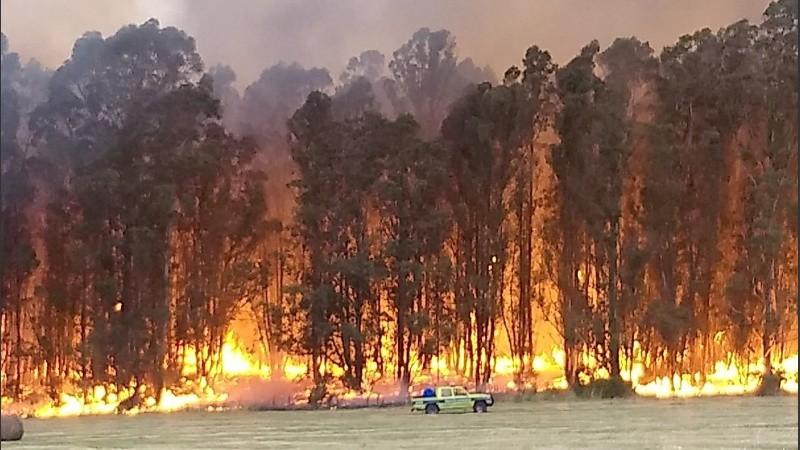 Un incendio afecta las Sierras de Tandil