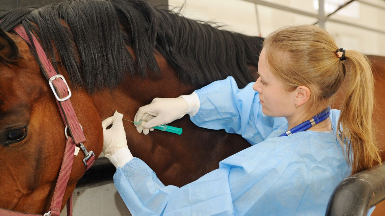 Provincia participa de la vigilancia del tratamiento con Suero Equino Hiperinmune en personas con Covid-19