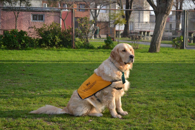 Charla informativa sobre perros de asistencia para niños con autismo